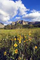 Wildflowers blooming in mountain meadow