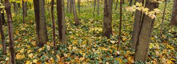 Fallen leaves in a forest