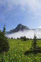 Fog lifting over Logan Pass and blooming wildflow