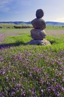 Stone marker in field of blooming shooting star f