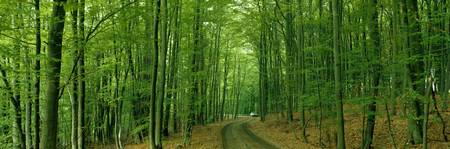 Forest Road near Limburg Germany