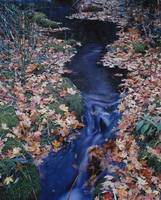 Fallen leaves on the banks of a stream