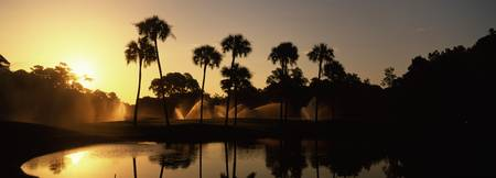 Silhouette of palm trees at sunrise in a golf cou