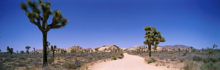 Dirt Road Through Joshua Tree National Park CA