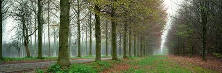Lane with Trees Chateau de Modave Modave Belgium