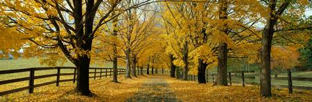 Autumn Trees near Waynesboro Virginia