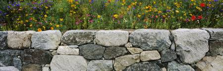 Wildflowers growing near a stone wall