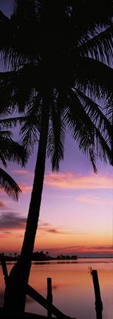 Silhouette of palm trees at dawn
