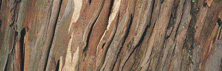 Close-up of a tree bark