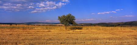 Wheat Field Central Anatolia Turkey
