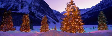 Lighted Christmas Trees Chateau Lake Louise Lake