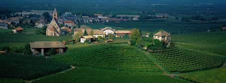 Vineyard Adige Valley Trentino-Alto-Adige Italy
