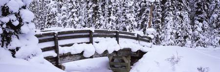 Snow covered footbridge in a forest
