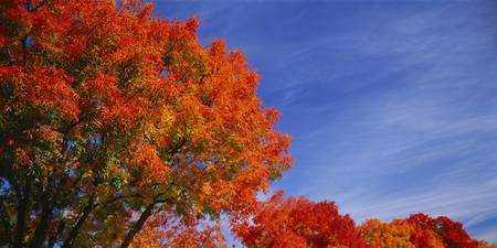 Low angle view of trees with red leaves