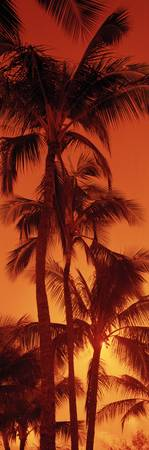 Low angle view of palm trees at dusk