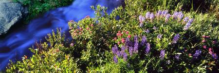 High angle view of Lupine and Spirea flowers near