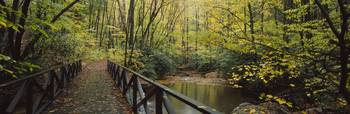Footbridge Over A Pond In A Forest