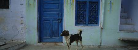 Dog In Front Of A House