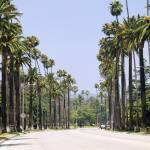 """Palm trees along a road"" by Panoramic_Images"