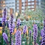 """The Highline, NYC"" by BonVivantPhotography"