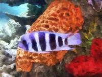 Striped Tropical Fish Frontosa