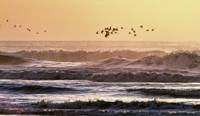 Shore Birds Flight At Sunset
