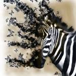 """Zebra Butterfly"" by jasonhoke"