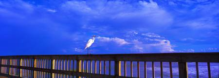 Daytona beach bird on fishing pier