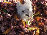 Beni And The Leaves Of Autumn