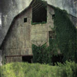 """Kalona Barn and Ivy"" by angelandspot"