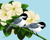 Black Capped Chickadees With Dogwood