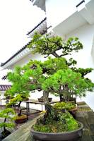 The Bonsai and the Castle