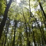 """Sun thru the Trees"" by MzEmCab"