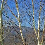 """Mountains thru the Trees"" by MzEmCab"