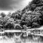 """Botanic Garden Singapore, Black and White Series"" by sghomedeco"
