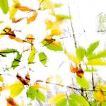 """Leaves Splash Abstract 2"" by NatalieKinnear"