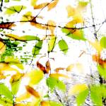"""Leaves Splash Abstract 1"" by NatalieKinnear"