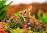 Rabbit-Nature-At-Flower-HD