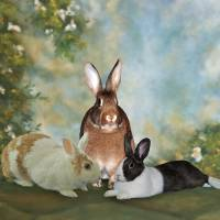 Bunnies In A Garden Art Prints & Posters by Diane Bell