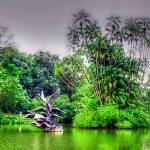 """Botanic Garden Singapore Series"" by sghomedeco"