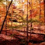 """Fall at Cuyahoga"" by ayseselen"