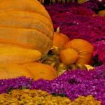 """""""Pumpkins and Flowers"""" by memoriesoflove"""