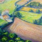 """""""barn owl hunting"""" by gillymissile"""