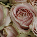 """""""Cottage Roses"""" by edesigns15"""