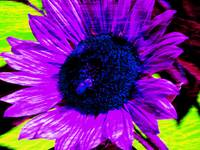 Flowers_07-01-05_0002 9 soft light copy_pe