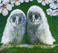 Two Baby Owls
