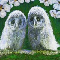 Two Baby Owls Art Prints & Posters by Jane Schnetlage