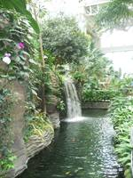 Gaylord Palms Hotel Waterfall