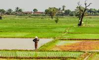 Fields of Laos