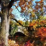 """Autumn Tree by Small Stone Bridge"" by susansartgallery"